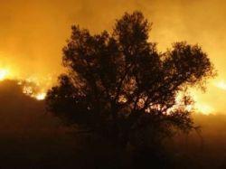 Десятилетнему ребенку, нечаянно устроившему лесной пожар в Калифорнии, грозит до трех лет тюрьмы