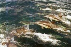 Убийство или самоубийство? Иран обвиняет США в убийстве 152 дельфинов