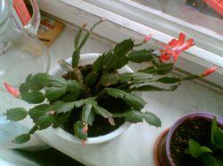 Комнатные цветы — убийцы или целители? Как правильно расставить растения в квартире