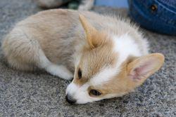 Firefox обновился до 2.0.0.9