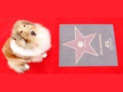 В Лондоне открылась собачья Аллея славы