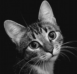 Преданный кот спас хозяина от грабителей