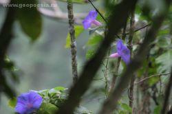 В Индонезии незаконно вырубили лесов на 200 миллиардов долларов