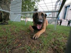 В Петербурге принят еще один закон о защите животных