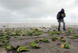 Побережье двух голландских островов Терсхеллинг и Амеланд засыпало бананами