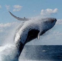 Ученые расшифровали язык китов