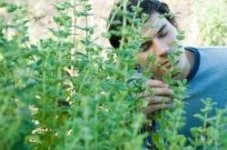 Какая трава — отрава? Мифы и реальность фитотерапии