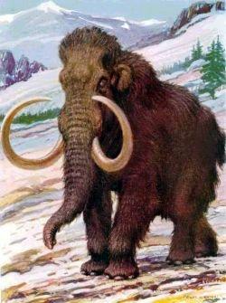 Во Владивосток прибыл контейнер с головой мамонта