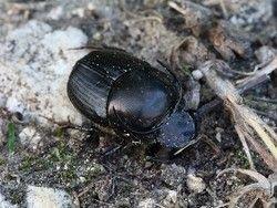 Новость на Newsland: Самое сильное в мире насекомое