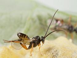 Новость на Newsland: Гусеницы принуждают растения привлекать своих врагов
