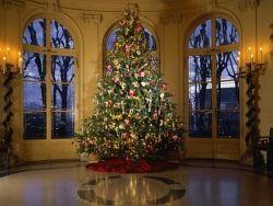 Зажглись огни главной рождественской елки США