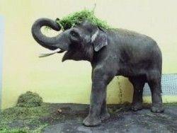 Как проводят отпуск индийские слоны