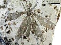 Новость на Newsland: Ученые приняли древнее насекомое за растение