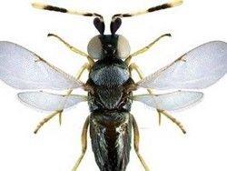 Новость на Newsland: Ученые: насекомые тоже страдают от похмелья