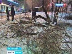Непогода повалила  деревья