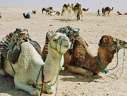 Кипящая Аравия