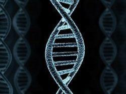 Верховный суд США решит, можно ли запатентовать гены