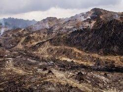 Миллиарды на сохранение лесов не принесли результатов