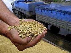 На Юге России резко снизился импорт зерна