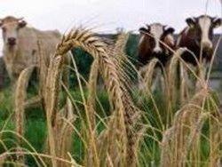 Датская компания приобретает 70 тысяч га сельхозземель