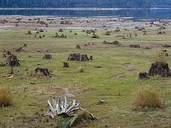 ЕС призвал РФ упростить экспорт древесины в рамках ВТО