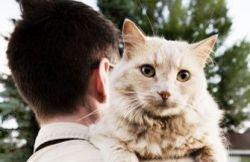 Любимый и заразный: какие болезни передаются от домашних животных