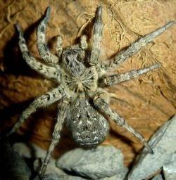 Кулинарные изыски мировой кулинарии: тарантулы, скорпионы и прочие деликатесы