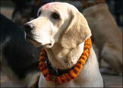 В Непале отмечается день собак (фото)