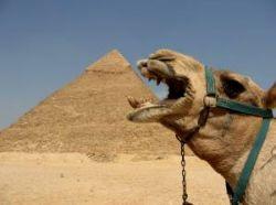 Ситуация с размещением россиян в Египте остается острой