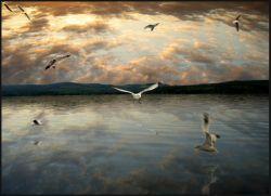 Массовая гибель птиц в Керченском проливе