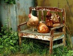 Эпидемия на птицеферме в Великобритании: опасный вирус птичьего гриппа возвращается