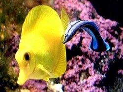 Новость на Newsland: Ученые раскрыли тайну коралловой рыбы