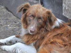Новость на Newsland: Пёс пять лет ждет хозяина, бросившего его на остановке