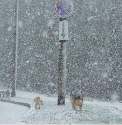 В Европе установилась небывало снежная зима