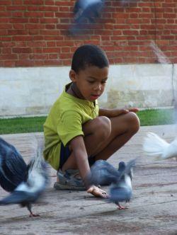 За кормление голубей в Нью-Йорке будут штрафовать на тысячу долларов
