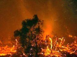 Прокуратура Калифорнии не будет предъявлять обвинения в поджоге десятилетнему мальчику, устроившему лесной пожар