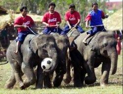 В субботу слоны Таиланда будут играть в футбол
