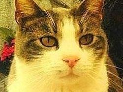 Новость на Newsland: Верный кот каждый день приносит подарки на могилу хозяина