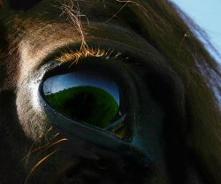 Госдума: Лошади - вне допинг-контроля