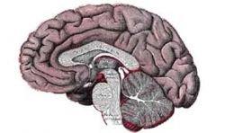 Китайские медики выявили феноменальную женщину, у которой есть только половина мозга