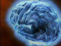 Ученые раскрыли механизм работы мозга после повреждения центральной нервной системы