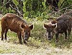 В Эстонии дикие животные держат в страхе селян, разоряют их поля и огороды
