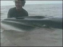 В джунглях Амазонки потеряли кита и крокодила