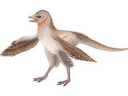 Новость на Newsland: Новый вид динозавра закрывает пробел в происхождении полёта