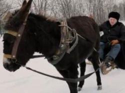 Новость на Newsland: Жириновский решил отдать ослика, которого отлупил в ролике