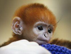 Новость на Newsland: Иран запустил в космос обезьяну