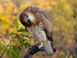 Новость на Newsland: Ученые изучили поворот головы сов
