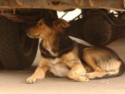 Новость на Newsland: Собака похитила сумку у строителя под Оренбургом