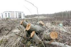 Ущерб окружающей среде Москвы от незаконной вырубки деревьев при строительстве оценен в 15 миллионов рублей