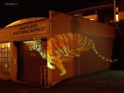Виртуальное граффити: бегущий тигр (видео)